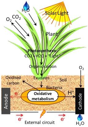 Plant BES