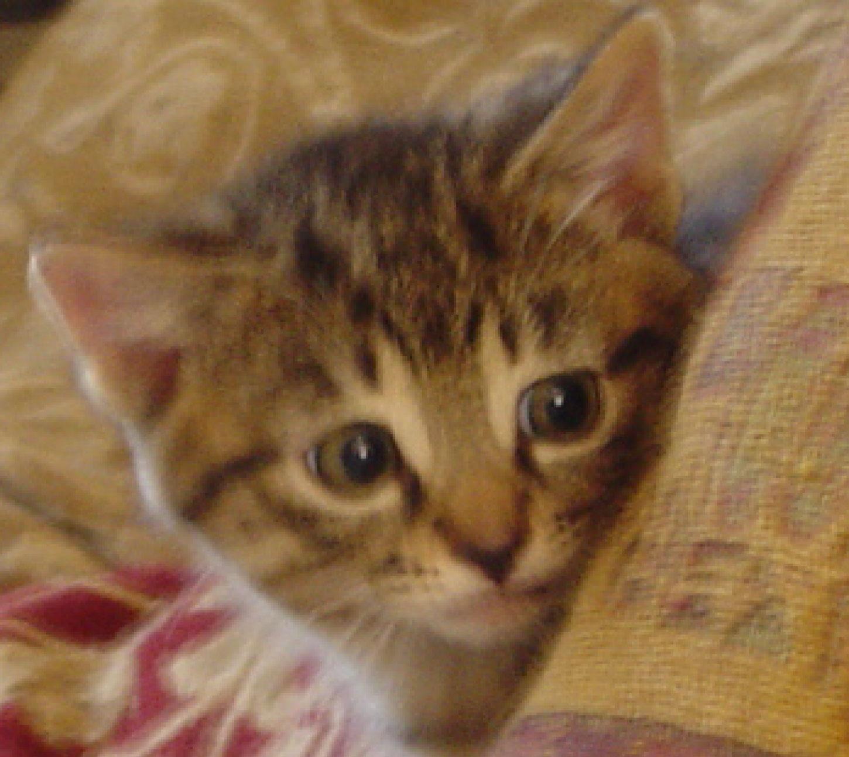 Kat photo