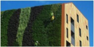 The Living wall 2