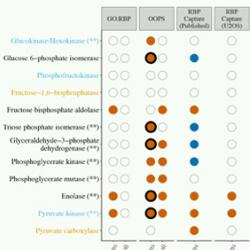 RNA interactors in Escherichia coli identified by OOPS.