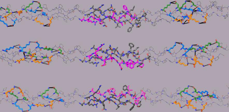 Crystal structures of the three computationally-designed triple-helical collagen peptides that mimic the three possible COL1 molecular structures.