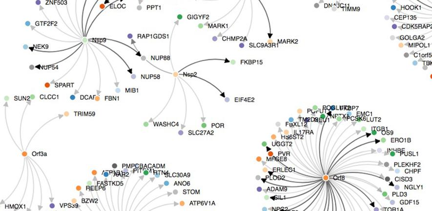 SARS-CoV-2-human protein-protein interactions.
