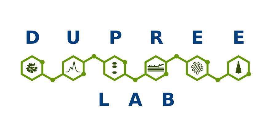 Dupree Group logo